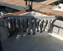 Caught the limit on Lake Michigan!