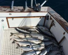 Charter Boat fishing on Lake Michigan